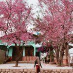 Kinh nghiệm đi du lịch tháng 1 Đà Lạt